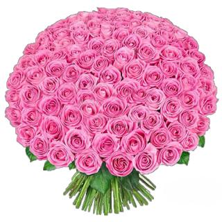 101 розовая роза (Эквадор)