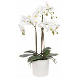 Белая орхидея фаленопсис с кашпо