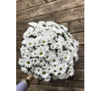 Топ Букет белых хризантем